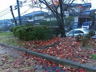 公園清掃リポート ~三島さんおめでとう~