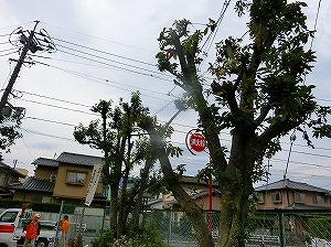 公園清掃リポート ~樹木が泣いている~