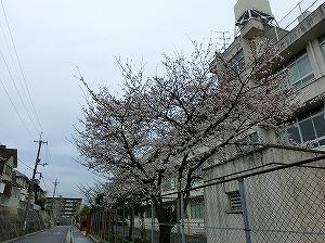 通学路清掃リポート ~小雨の春休み~
