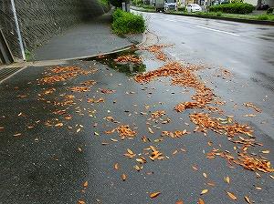 通学路清掃リポート ~先頭に立つ~