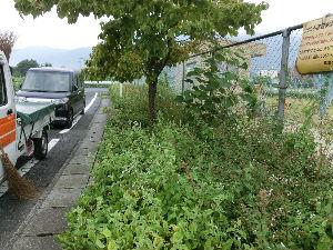 公園清掃リポート ~雑草に埋まる公園~