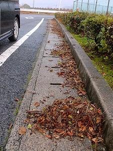 公園清掃リポート ~雑草萌える~
