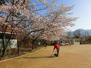 公園清掃リポート ~もうすぐ桜が満開~