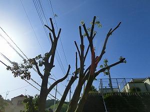 公園清掃リポート ~植栽が復活~