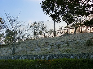 公園清掃リポート ~朝は冬に逆戻り~