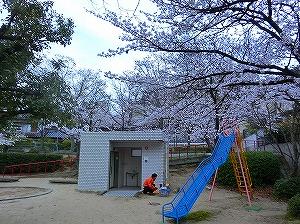 公園清掃リポート ~さくら咲く~