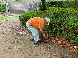 公園清掃リポート ~整った美しさ~