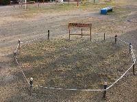 公園清掃リポート ~広島市民球場の記念芝生~