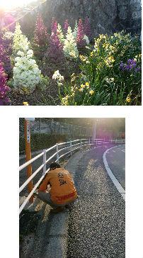 公園清掃リポート ~春の太陽を浴びて~