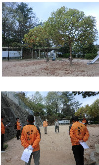 公園清掃リポート ~常緑樹の衣替え~