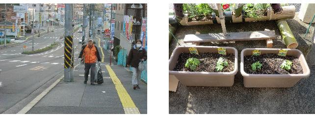 早朝清掃リポート ~野菜を植える~