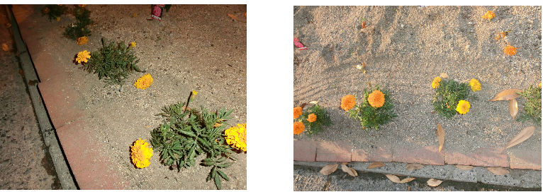 早朝清掃リポート ~花壇にタイヤの跡が~