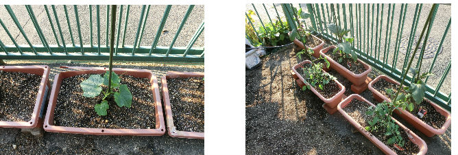 早朝清掃リポート ~野菜をすべて植え替える~