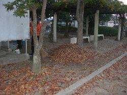 公園清掃リポート ~秋を惜しむ落ち葉の舞~