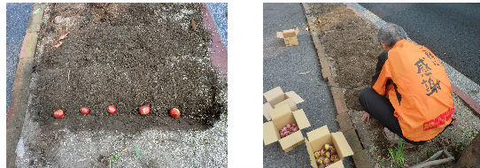 早朝清掃リポート ~チューリップを植える~