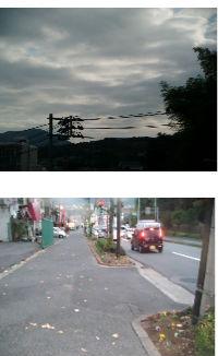 早朝清掃リポート ~花壇の主役が交代~