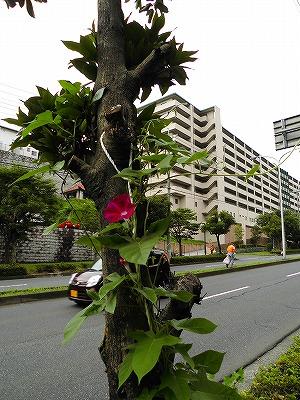 2015.7.16soutyou (2)