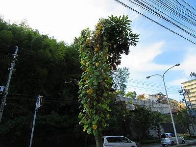 2015.10.20soutyou (1)