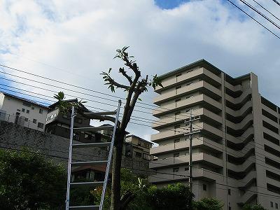 2015.10.2soutou (1)