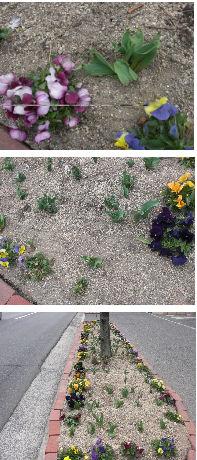 早朝清掃リポート ~花壇にタイヤの跡~